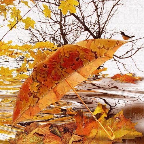 Delightful Autumn, Donu0027t Forget Your Umbrella!
