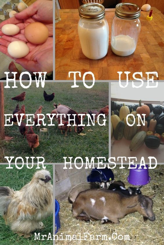 How to use everything on your homestead so that nothing goes to waste!