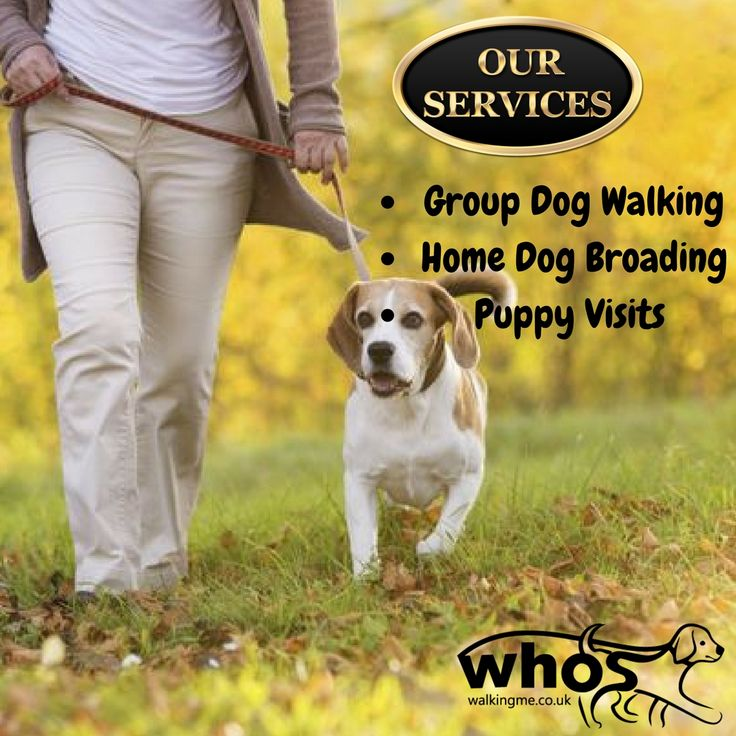 The Services you can procure from #dogwalkers #cheltenham,Starting from dog #walking to #dogboarding, please feel free to contact us:-  http://www.whoswalkingme.co.uk/  #dogs #petcare #dogcaretaker