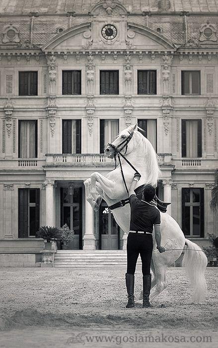 The Royal Andalusian School of Equestrian Art, Jerez de la Frontera.