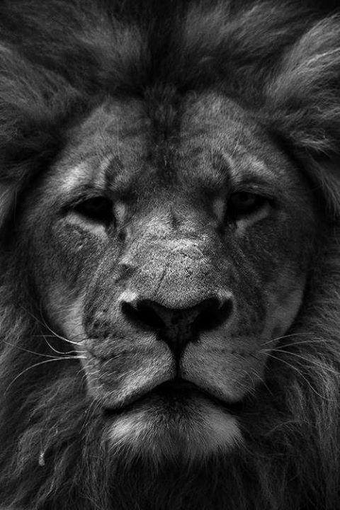 Life's Best #Lion #King #A #True #King #Jungle