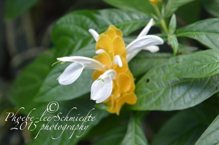 yellow and white flower in bali, 2014