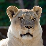 Make your own animal scavenger hunt at the Lincoln Park Zoo!  Create a list of animals you might see and check them off as you go.  Afterwards, create stories and pictures about what you saw during your animal adventure!