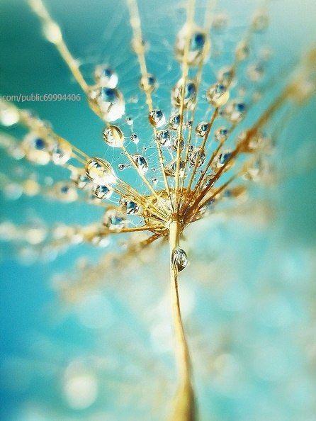 Жизнь в цвете (Фото Подборки) | Фотографии природы, Водная ...