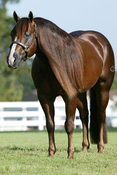 American Quarter Horse | ... Dream becomes NRHA Two Million Dollar Sire | reining horses for sale