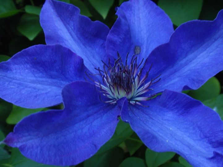 Pin By Gardening Know How On Color Blue Garden Design