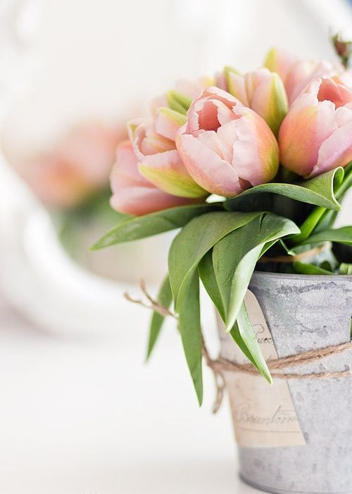 Mejores 99 imágenes de Garden en Pinterest | Terrazas, Decoraciones ...
