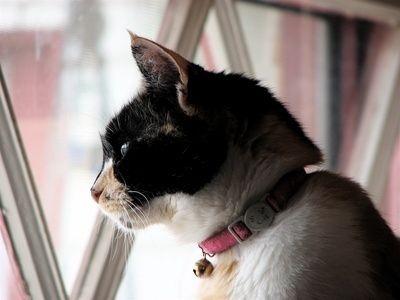 Gatti e grandi altezze: ecco perché ci cascano sempre