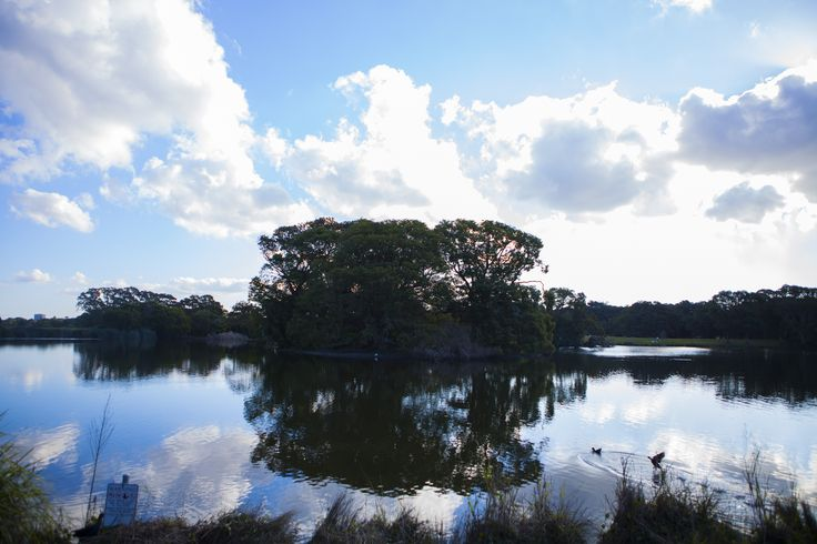 Photo Number 177. Water reflection #auphotoproject #water