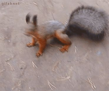 This oddly human-like squirrel