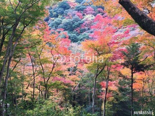 """ロイヤリティーフリーの写真 """"山の紅葉01"""" は mitsuruy が作成し、Fotolia.com から格安でダウンロードできます。"""