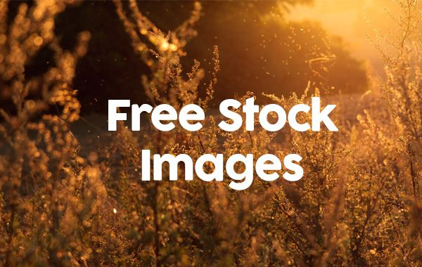 Any time you start a new project you should remember that the photos around the web are not all free to use and if you do it you could have some troubles. There are some website were you could buy ...