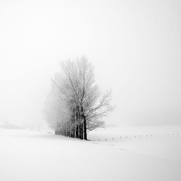 a winter's tale  By Carmen Spitznagel