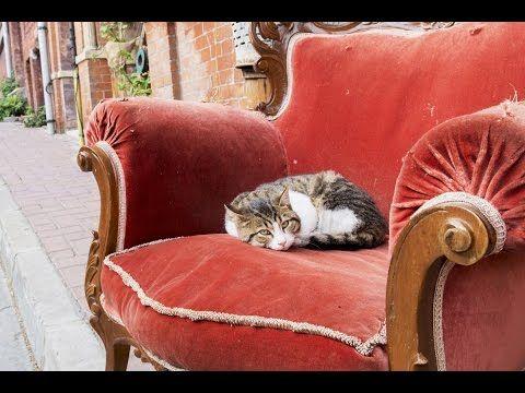Cómo viven los gatos callejeros en Estambul - Blog de Hogarmania