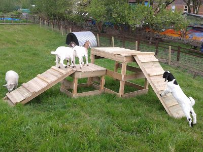 Carvings with Stories: Making a goat play ramp structure at Boiling Wells for St Werburghs City farm