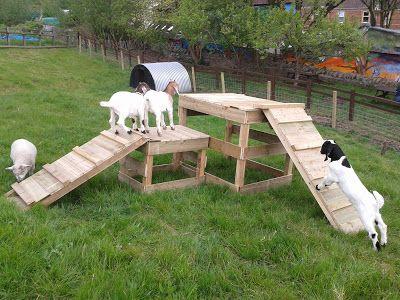 Goats love a fun house........ Goats do