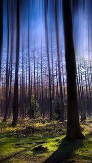 dans les bois | Flickr - Photo Sharing!