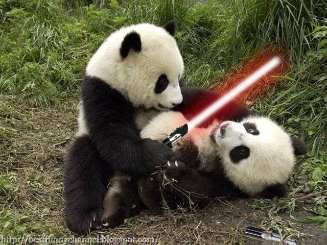 wars panda bear -#main