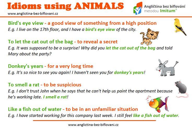 Více si o problematice idiomů najdete na našich stránkách. My se dnes zaměříme na idiomy, které obsahují zvířata. 🐱🐭🐠 #anglictina #idiomy #zvirata