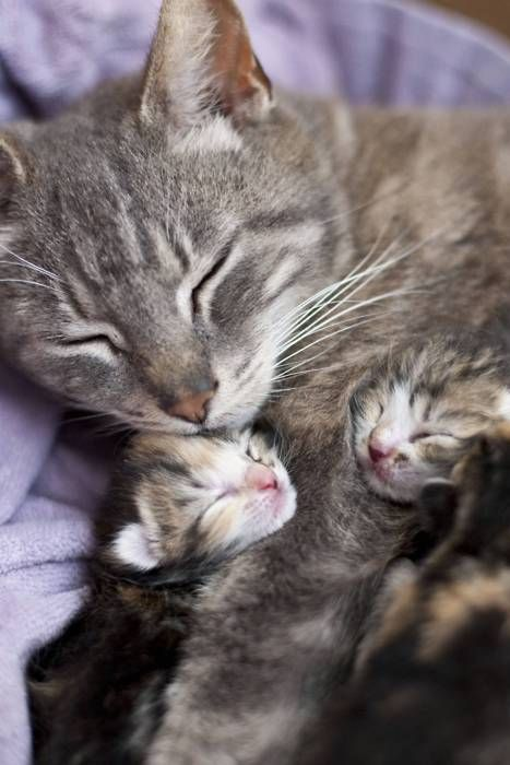 sleepy mother and kittens