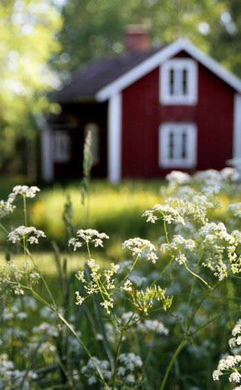 Red cottage and flowers in Småland, Sweden