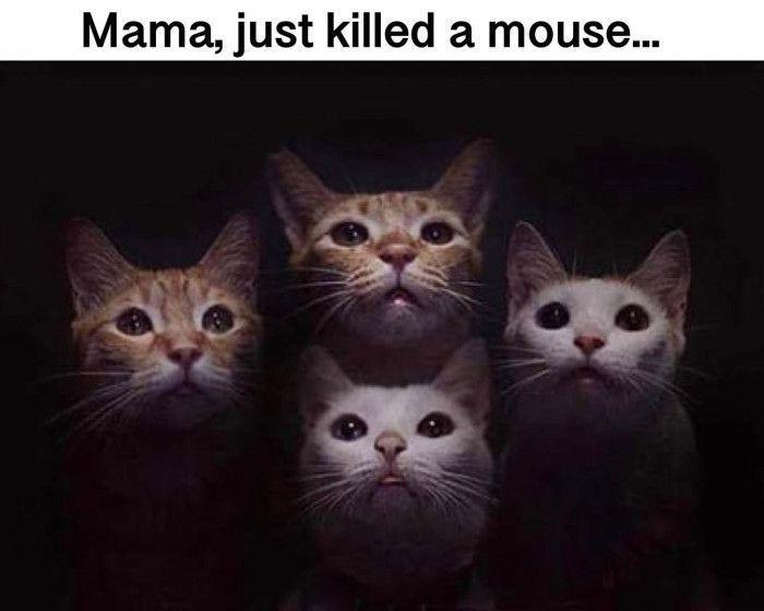TOP 45 fotos engraçadas de gatos   – Ruth