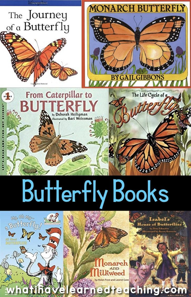 Life Cycle of a Butterfly Teaching Ideas   Best of Third Grade