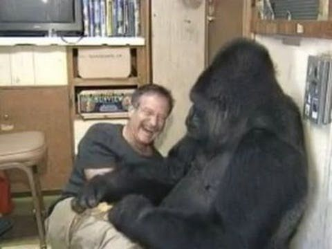 ▶ Koko the Gorilla meets Robin Williams - YouTube