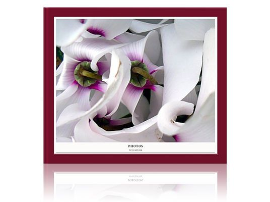 Make beautiful photo albums online from your best photos to share with family and friends. Choose a format. Upload your images. Design and order.