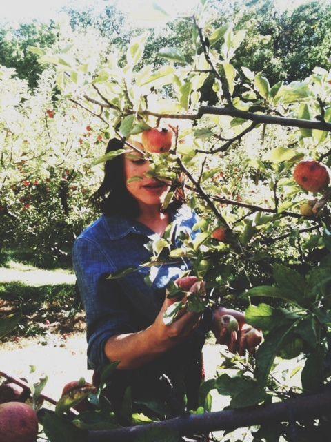 apple picking: