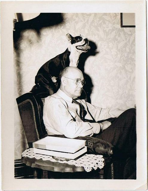 man with boston terrier (evidence that all Bostons...& probably every breed of terrier) love to sit on their master's head.
