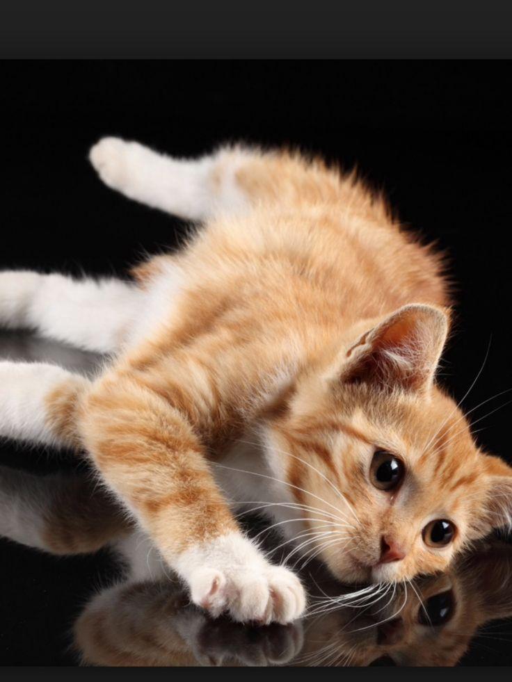 69 Best Video Cute Kittens Images On Pinterest