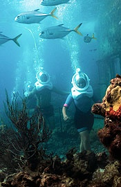 Coral World Ocean Park, St. Thomas, U.S. Virgin Islands  $19 for adults - undersea observatory/ 29 with snorkeling, 79 with Sea Trek, 41 with Semi Submarine, 73 with Snuba
