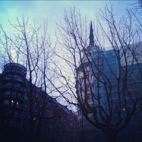 Winter trees, Donosti. ♡