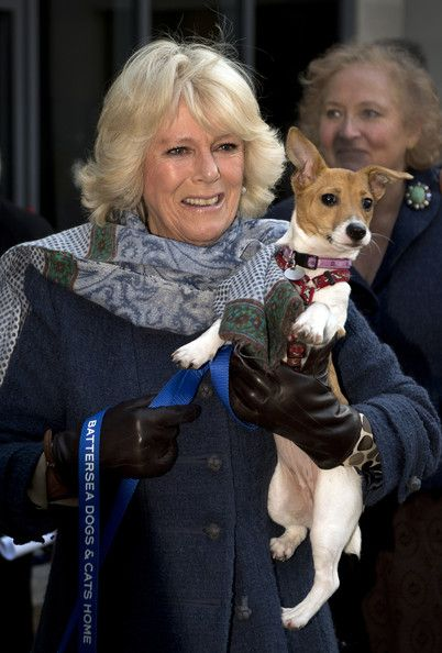As patron of Battersea Dogs and Cats, Camilla paid a visit to the shelter with her own two rescued Jack Russell terriers Beth and Bluebell. 12 Dec 2012 (Source: WPA Pool/Getty Images Europe)
