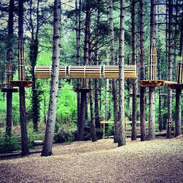 Our Junior Tree Top At Moors Valley Country Park In All Its Glory Aimed 6 12 Year Olds