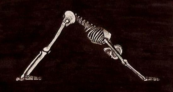 Our skeletons love downward facing dog and all other yoga poses too! #backinmotion.us