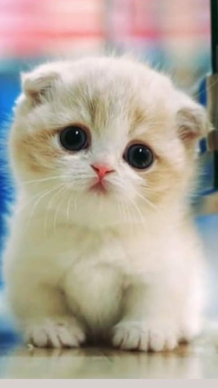 #cutekittens #kittens #catsandkittens kittens adorable | cutest kittens ever | c…