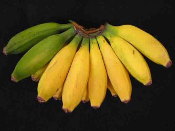 Banana Pisang Ceylon