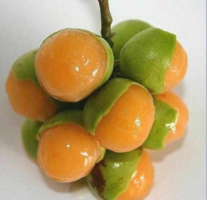 list of citrus fruits quenepa fruit