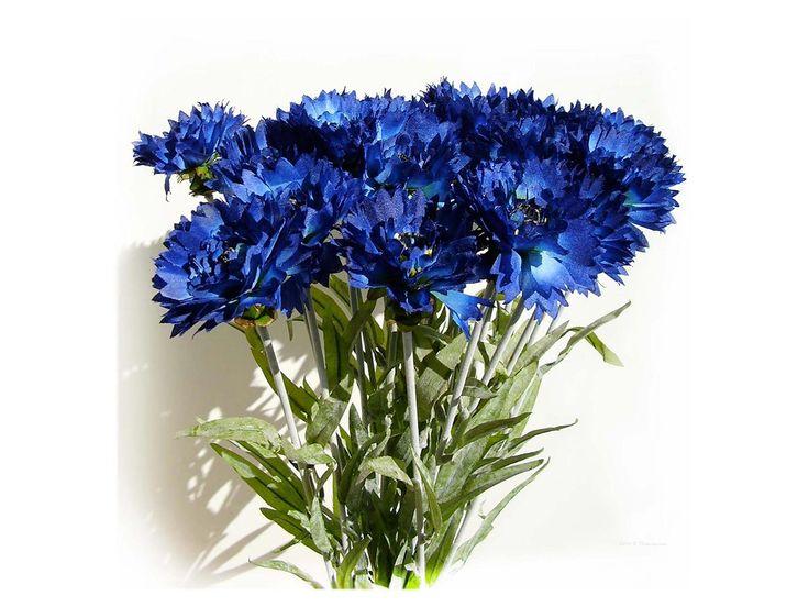 Василек синий.