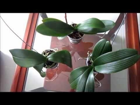 17 melhores ideias sobre orqu deas no pinterest cultivo for Cuidados orquideas interior