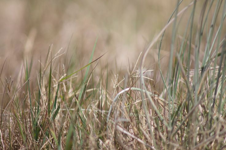 Beach Grasses #Waimarama #New Zealand Beaches