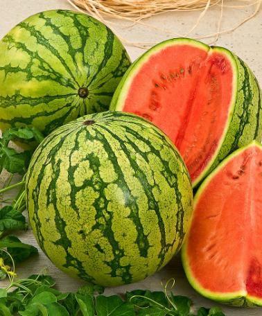 exotica rare fruit nursery best healthy fruits