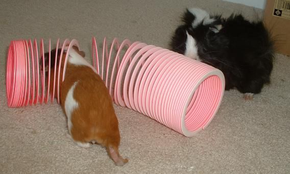 guinea pig toy! I still might have one of these. Great idea!...for the broken ones