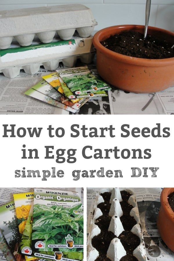 How To Start Seeds In Egg Cartons At Home With Images Planting