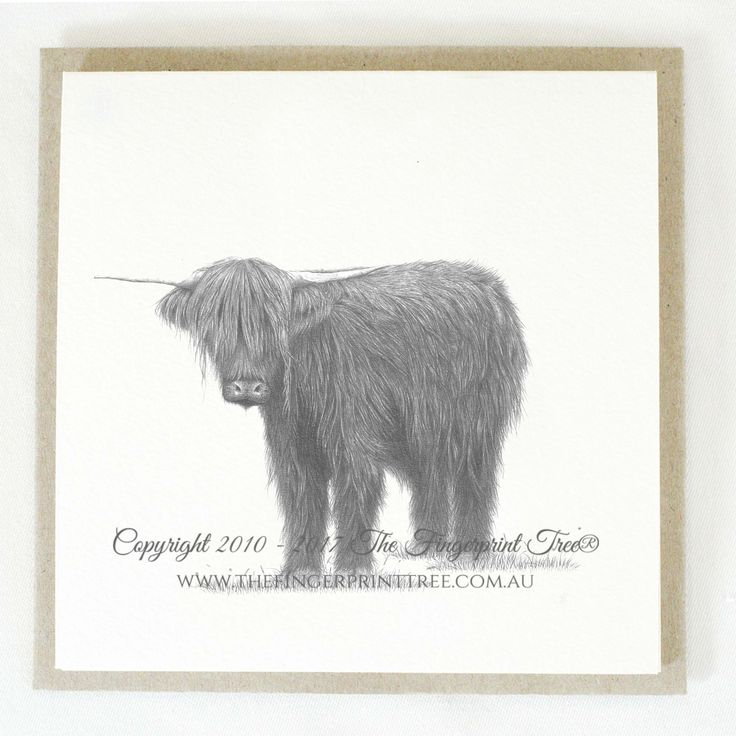 Gift card - Highland cow:  Cards! by The Fingerprint Tree® is our couture range of gift cards featuring illustrations by Ray Carter, Chief Artist & Founder.  Made-to-order and Giclée printed at our Southern Highlands studio.   We sell direct to the public and to retailers.