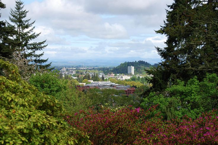 hendrick's park rhododendron garden looking towards downtown and skinner's butte