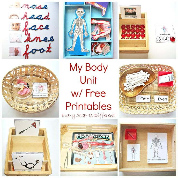 Every Star Is Different: My Body Unit w/ Free Printables from Every Star Is Different