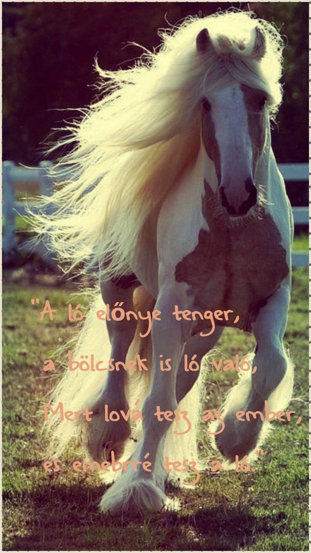 """""""A ló előnye tenger, A bölcseknek is ló való, Mert lóvá tesz az ember, Én emberré a ló."""""""